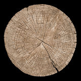 Cross section of tree trunk. Showing growth rings on black background. wood texture Royalty Free Stock Photography