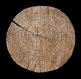 Cross section of tree trunk showing growth rings Stock Image