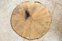 Cross section of tree trunk showing growth rings Stock Photography