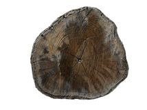 Cross section of tree trunk showing growth rings. On white background Royalty Free Stock Photo