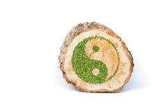 Cross section of tree trunk with Ying yang symbol Royalty Free Stock Images