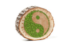 Cross section of tree trunk with Ying yang symbol Royalty Free Stock Image