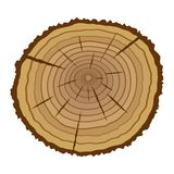 Cross section of tree Stock Image