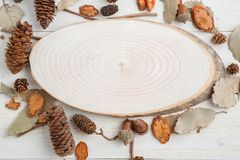 Cross-section of a tree on a wooden background in autumn style . top view with space for text.  royalty free stock photo