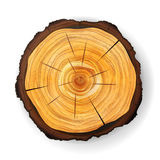 Cross Section Tree Wooden Stump Vector. Round Cut With Annual Rings royalty free illustration