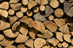Cross section of wood Royalty Free Stock Images