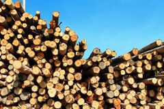 Cross section of wood background Stock Photos