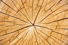 Cross-section of wood with cracks stock image