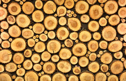 Cross section of wood logs taped on a wall Stock Photography