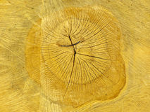 Cross Section Of Wood Royalty Free Stock Photography