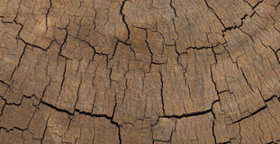 Cross section wooden texture Royalty Free Stock Photo