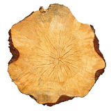 Cross-sectional cut of tree Stock Photography