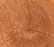 Cross-sectional cut of tree Stock Image