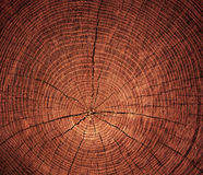Cross-sectional cut of tree Stock Photos