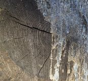 A cross-sectional view of the cut end of cut wood texture spreading royalty free stock photography