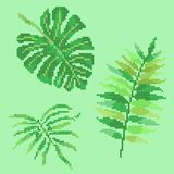 Cross stitch palm leaves Royalty Free Stock Photos