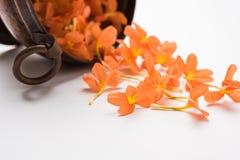 crossandra亦称储蓄照片在印度开花Aboli花 免版税库存图片
