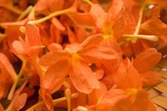 crossandra亦称储蓄照片在印度开花Aboli花 库存图片