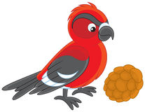 Free Crossbill Royalty Free Stock Images - 42649429