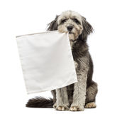 Crossbreed, 4 years old, sitting and holding a flag white in its mouth Royalty Free Stock Photos