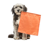 Crossbreed, 4 years old, sitting and holding an orange flag in its mouth Stock Photography
