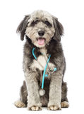 Crossbreed, 4 years old, sitting and wearing a blue stethoscope around the neck Royalty Free Stock Image