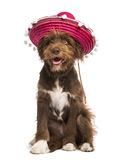 Crossbreed, 5 months old, sitting and wearing a sombrero Royalty Free Stock Photography
