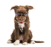 Crossbreed, 5 months old, sitting and wearing sunglasses Royalty Free Stock Images