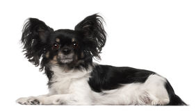 Crossbreed dog Stock Images