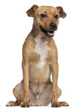 Crossbreed dog, 6 months old, sitting Stock Photo
