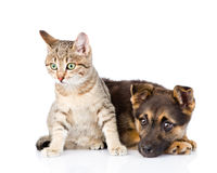 Crossbreed dog and cat together. isolated on white background.  Stock Photography
