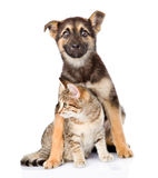Crossbreed dog hugging tabby cat on white background. Crossbreed dog hugging tabby cat. on white background stock photo