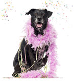 Crossbreed dog partying Stock Photography