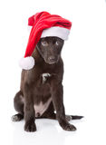 Crossbreed dog with red hat. isolated on white background Stock Image