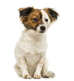 Crossbreed dog sitting, 2 years old Stock Image