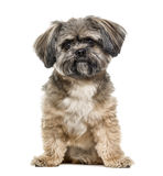 Crossbreed dog sitting, 3 years old, isolated Royalty Free Stock Photography