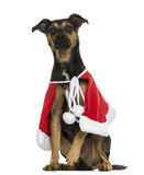 Crossbreed dog wearing a christmas cape, sitting, isolated Royalty Free Stock Photos