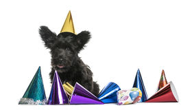 Crossbreed dog wearing a party hat Royalty Free Stock Photo