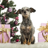 Crossbreed sitting in front of Christmas decorations Royalty Free Stock Image
