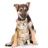 Crossbreed and small tabby cat on white background Royalty Free Stock Photo