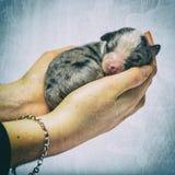 Crossbreed szczeniak w rękach przeciw barwionemu tłu Obraz Royalty Free