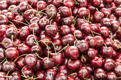 A pile of Lapins cherries. stock photos