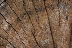 Crosscut de um tronco de árvore velho Foto de Stock