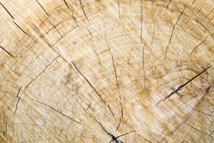 Crosscut Log. Wood grain and cracks on crosscut log Royalty Free Stock Photography