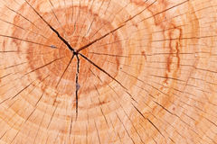 Crosscut Log Royalty Free Stock Images