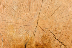 Crosscut log radial pattern Royalty Free Stock Photo