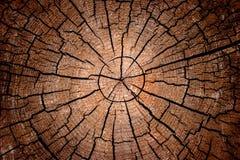 crosscut log zatwierdzenia promieniowego Fotografia Royalty Free