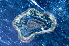 Crosscutting de ver de terre de micrographe photographie stock libre de droits