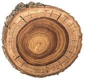 Crossection d'un tronc d'arbre Images libres de droits