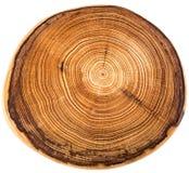 Crossection di un tronco di albero Immagini Stock Libere da Diritti